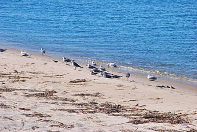 Photograph - Seagull Buffet On The Chesapeake Bay by Paulette B Wright