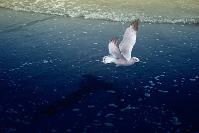 Photograph - Seagull Color Infrared by Dave Beckerman