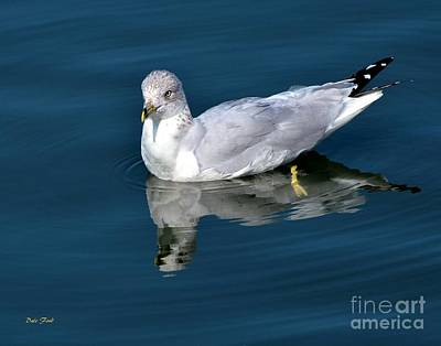 Digital Art - Seagull by Dale   Ford