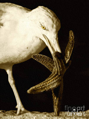 Seagull Dancing With A Star Art Print by Carol F Austin