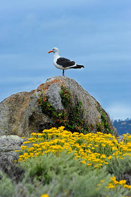 Photograph - Seagull by Don and Bonnie Fink