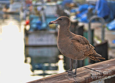 Photograph - Seagull by Donna Greene