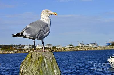 Photograph - Seagull by Doug Heavlow