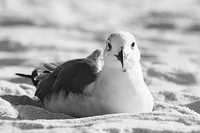 Art Print featuring the photograph Seagull by Elizabeth Budd