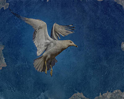 Seagull Digital Art - Seagull by Ernie Echols