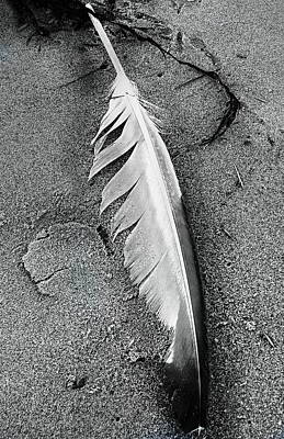 Photograph - Seagull Feather by Expressionistart studio Priscilla Batzell