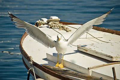 Photograph - Seagull Flown Away From Boat by Brch Photography