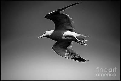Seagull Flying Higher  Art Print by Stefano Senise