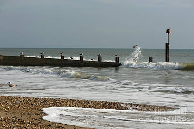 Flying Seagull Photograph - Seagull Groyne by Anne Gilbert