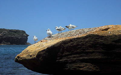 Photograph - Seagull Hangout by Peter Mooyman