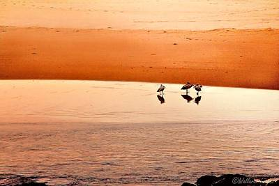 Photograph - Seagull Huddle by Wallaroo Images