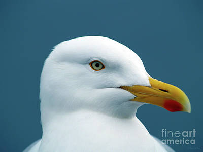 Photograph - Seagull I by Patricia Griffin Brett