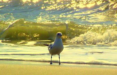 Rebecca West Photograph - Seagull I by Rebecca West