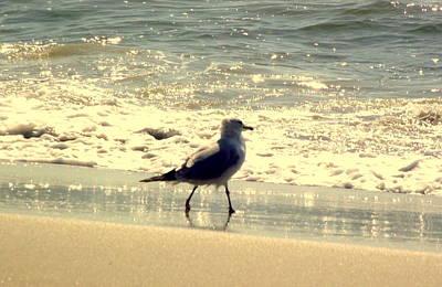 Rebecca West Photograph - Seagull II by Rebecca West
