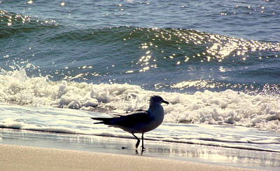Rebecca West Photograph - Seagull IIi by Rebecca West