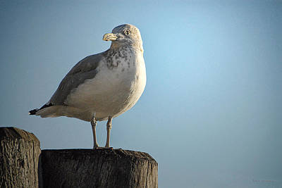 Photograph - Seagull In Battery Park by Dyle   Warren