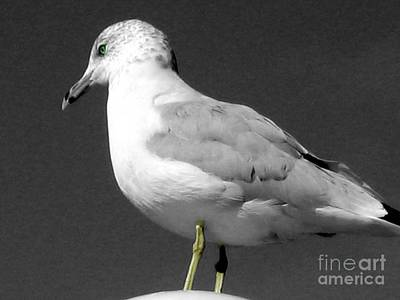 Photograph - Seagull In Black And White by Nina Silver