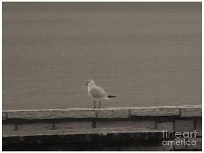 Photograph - Seagull In Black by Katerina Kostaki