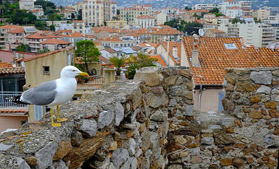 Seagull In Cannes Old City Art Print