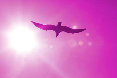 Target Threshold Nature - Seagull in Flight 10 by Cathy Lindsey