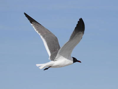 Ocean Photograph - Seagull In Flight 2 by Cathy Lindsey