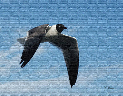 Photograph - Seagull In Flight by James C Thomas