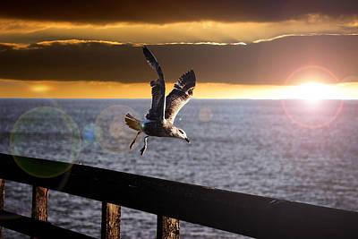 Ocean Mammals Photograph - Seagull In Flight by Martin Newman