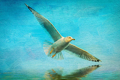 Cape Cod Digital Art - Seagull In Flight by Michael Petrizzo