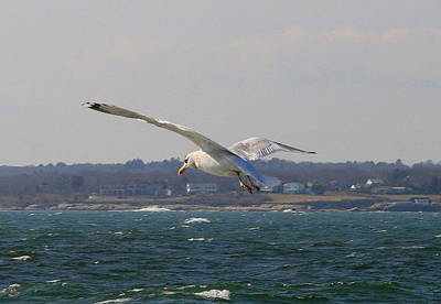 Photograph - Seagull Ocean Flight  by Neal Eslinger