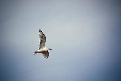 Photograph - Seagull In Flight by Sennie Pierson