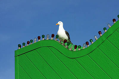 Color Block Photograph - Seagull In Lights by Art Block Collections
