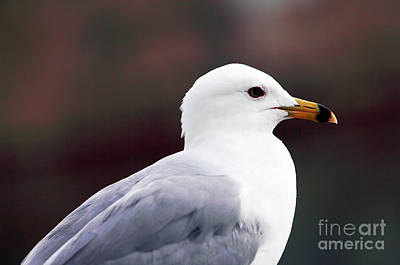 Old Montreal Photograph - Seagull by John Rizzuto