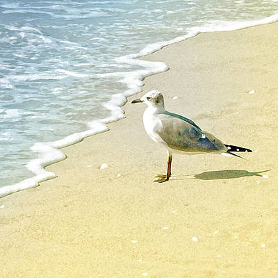 Photograph - Seagull by Karen Lynch