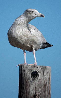 Digital Art - Seagull by Kelvin Booker