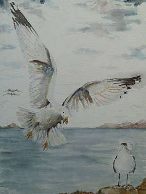 Sea Of Cortez Painting - Seagull Landing by J A Rix
