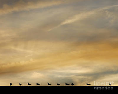 Photograph - Seagull Lineup by Kristen Fox