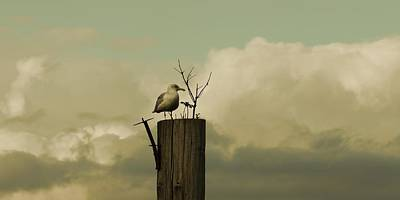 Photograph - Seagull Lookout by Patricia Strand