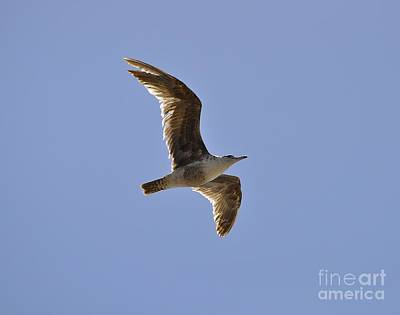 Photograph - Seagull N Light  by Bridgette Gomes