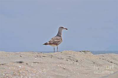 Photograph - Seagull N Sand  by Bridgette Gomes