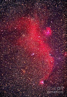 Ic 2177 Photograph - Seagull Nebula by Chris Cook