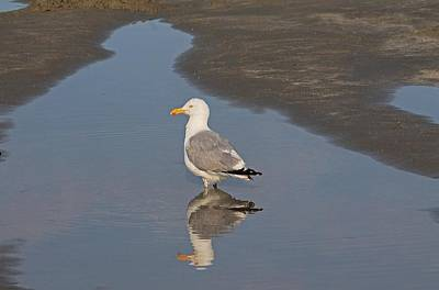 Photograph - Seagull On Good Harbor Beach by Michael Saunders