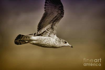 Flying Seagull Photograph - Seagull Oil by Deborah Benoit