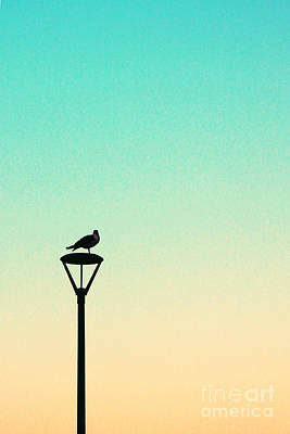 Seagull On A Lamppost - Aqua Art Print by K Hines