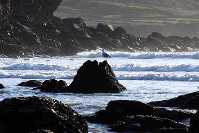 Photograph - Seagull On A Rock by Aidan Moran