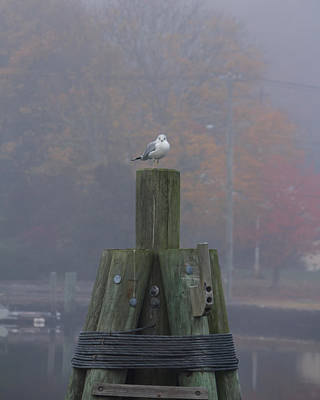 Photograph - Seagull On His Throne by Kirkodd Photography Of New England