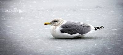 Photograph - Seagull On Ice by Aaron Berg