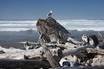 Seagull On Oregon Coast Art Print by Peter French