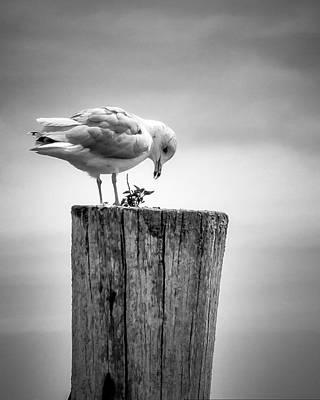 Seagull On Pier  Art Print