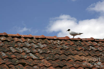 Design Pics - Seagull on red roof  by Sasas Photography
