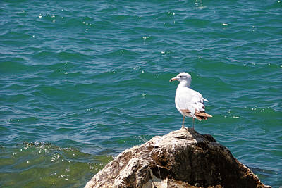 Seagull On Rock Art Print